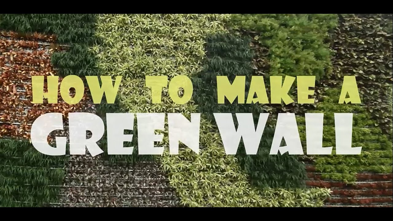 How To Make A Living Wall how to make a green wall - youtube