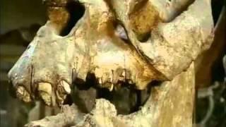 Darwin y la teoría de la evolución