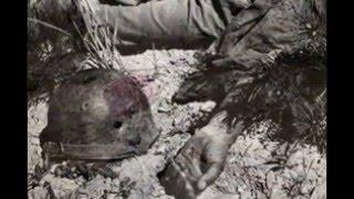 (PS4) 【閲覧注意】過酷な戦争画像集(war)【ショッキング】 poso