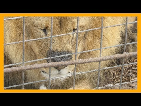 Why YOU Should NOT Support Zoos | peta2