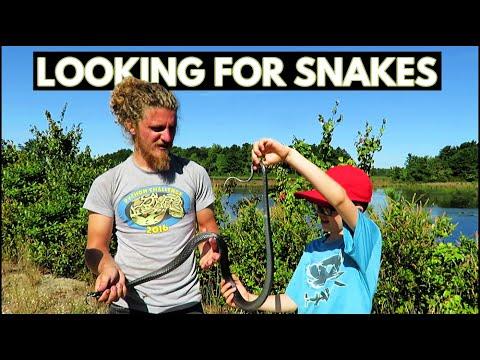 NJ Pinelands National Reserve - Snakes! (Vlog)