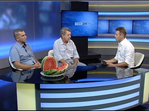 Селекционер Виктор Лазько: чем ближе к центру — «душе арбуза», тем уровень ликопина выше