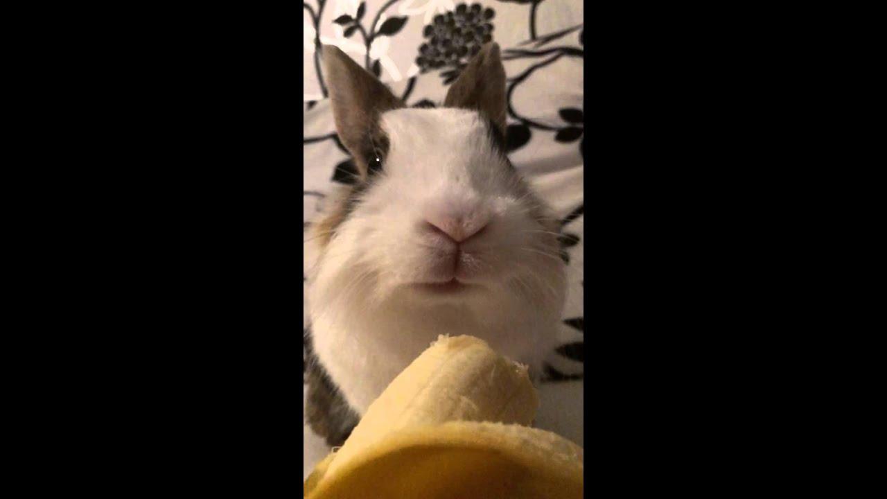 Atemberaubend Kaninchen frisst Banane - YouTube &YX_03