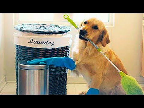 SMART PETS: CAT & DOG CUTE VIDEOS | Funny Pets Compilation