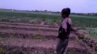 lipsing lagu india