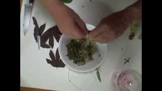 Eat The Weeds: Episode 142: Backyard Salad