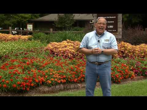 Profusion Zinnias, Beautiful, Disease Resistant Flowers