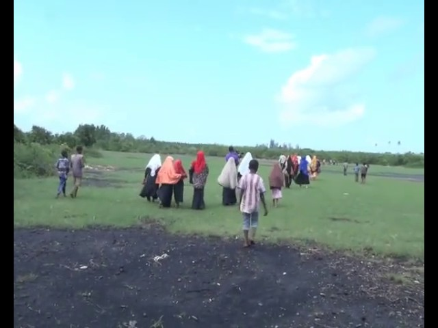 Jozani Mangrove plantation Amina Kashoro