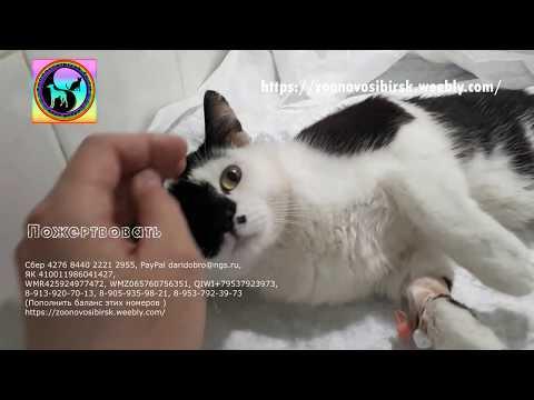 Причины паралича конечностей кошки можно установить по МРТ и КТ The Cat Needs Help