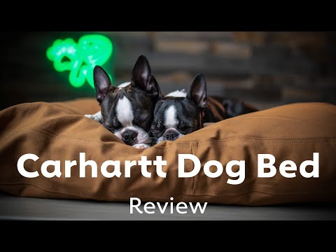 Carhartt Dog Bed Review | Rover.com