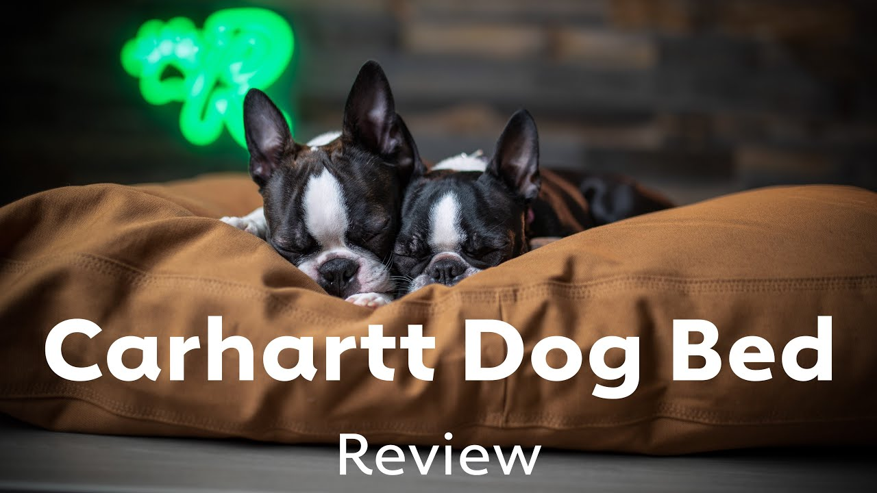 Carhartt Dog Bed Review Rover