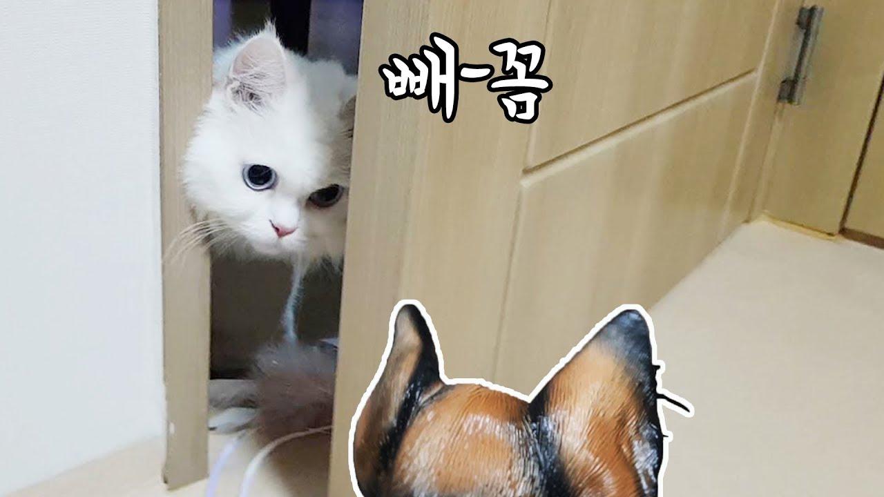 대형견 가면을 썼더니 고양이 반응이ㅋㅋㅣ문 뒤에서 빼꼼~넌 뭐다냥?!!!