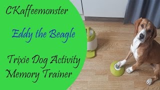 Beagle Eddy Tries Out Dog Activity Memory Trainer