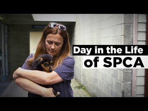 Day In The Life of SPCA
