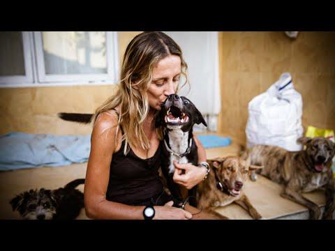 Bali Dog -  Franci documentary