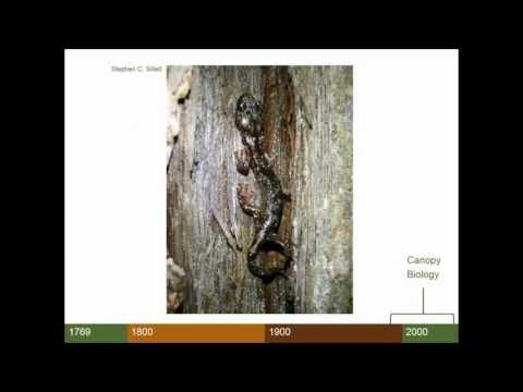 Emily Burns - Contemporary Understanding of Coast Redwood
