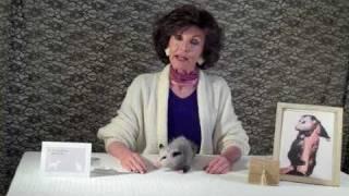 Proper Opossum Disposal