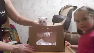 Переноска для котенка своими руками.