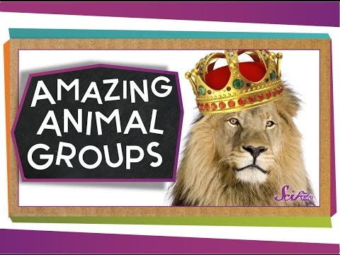 Amazing Animal Groups