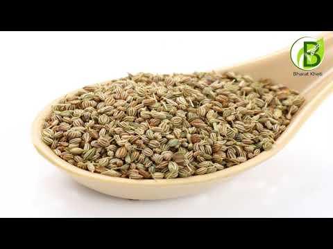 ऐसे करें अजवाइन की खेती | Ajwain, ajowan - bishop's weed | Bharat kheti