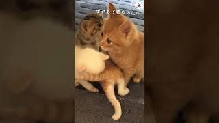 自分より体が小さな子猫にママ猫だと勘違いされて 戸惑う猫さん  #Shorts