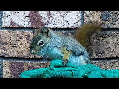 Cheeky squirrel chews his way into deer's treats