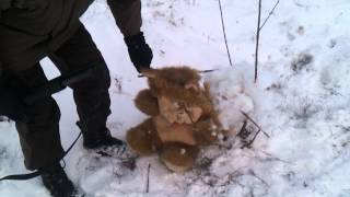 Настоящая Охота на медведя!