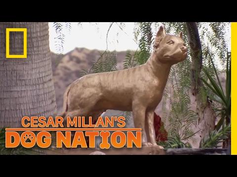 Remembering Daddy | Cesar Millan's Dog Nation