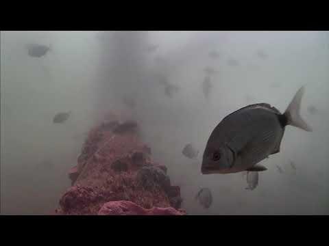 Sharks in the Atlantic Cam 05-26-2017 09:37:57 - 10:37:57