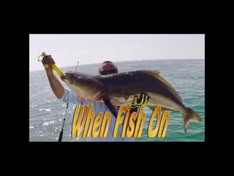 Offshore Cobia Fishing  - Sea of Abu Dhabi -UAE
