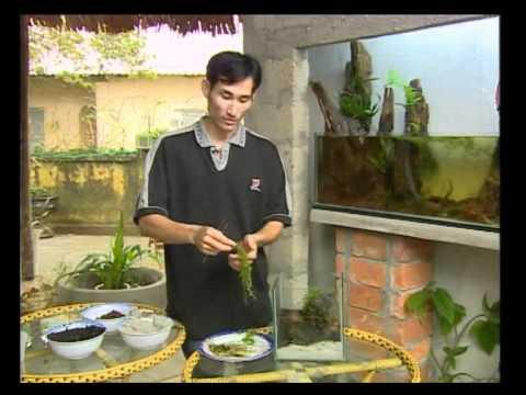 www.cafethuysinh.com -  Hướng dẫn setup bể thủy sinh (nano)