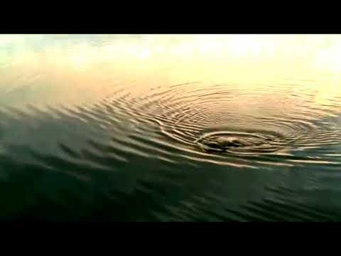 La pescuit pe Lacul Boteni 1 cu undita simetrie, linia cu care prind tot timpul from YouTube · Duration:  10 minutes 20 seconds