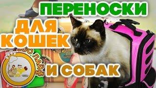Переноски для кошек, котят и маленьких собак. Как выбрать переноску для котят. Кошки. Собаки.