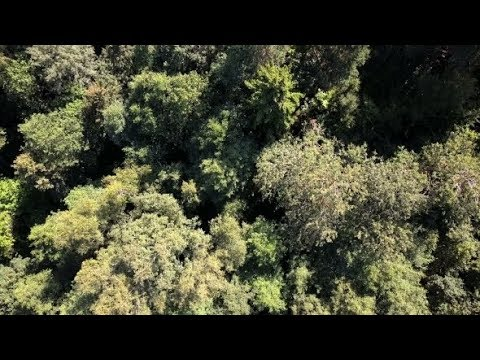 Aerial Drone Shot Over the North European Forest - Fly Over Green Trees | Stock Footage - Videohive