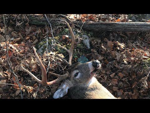 Big Connecticut Buck(Marlin 336c .35Rem)