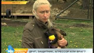 Знают ли иркутяне правила содержания и воспитания собак?