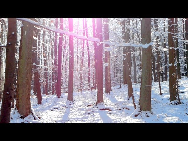 Instrumental Music to Relax, Study and Work - relaxdaily N°064
