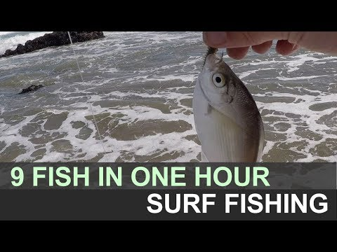 We Got 9 Fish In One Hour. Bodega Bay North Salmon Creek Surf Fishing