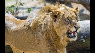Животные мира Сафари по Африке Сила миграции Дикая Танзания Баланс природы След зверя