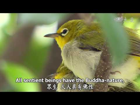 Wisdom at Dawn (Lotus Sutra) ep1263: Sentient Beings Hope to Resolve Doubts