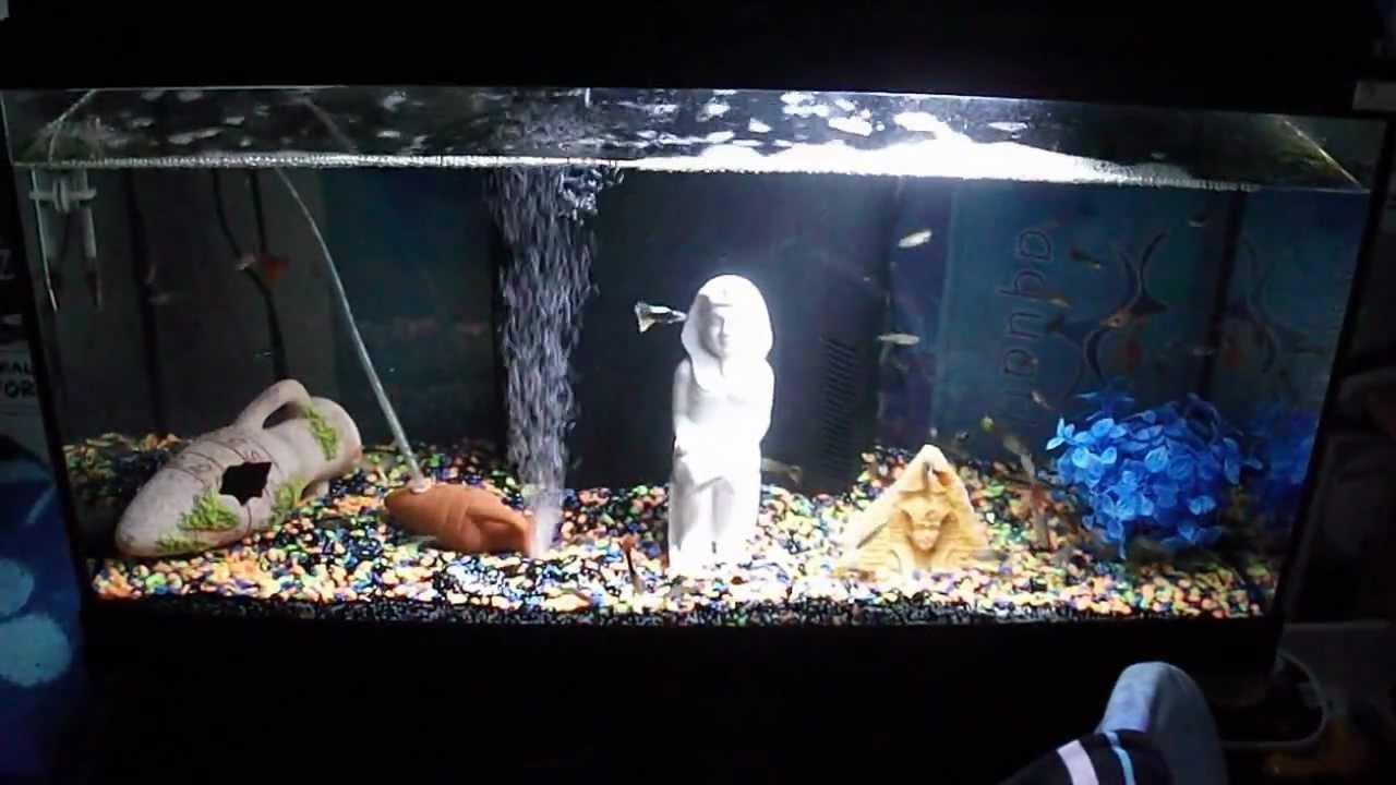 Mon Aquarium Nettoyer - YouTube