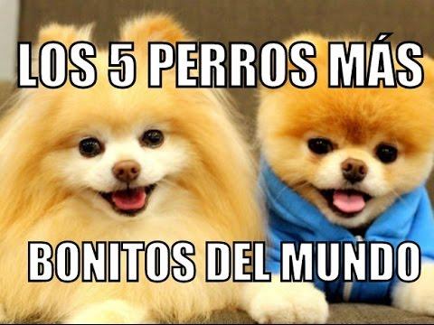 Los 5 perros m s bonitos del mundo youtube - Fotos de los cuartos mas bonitos del mundo ...