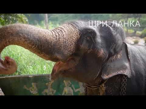 Туры на Шри-Ланку. Что посмотреть в 2018-2019 году?