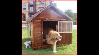 18mm wooden dog house