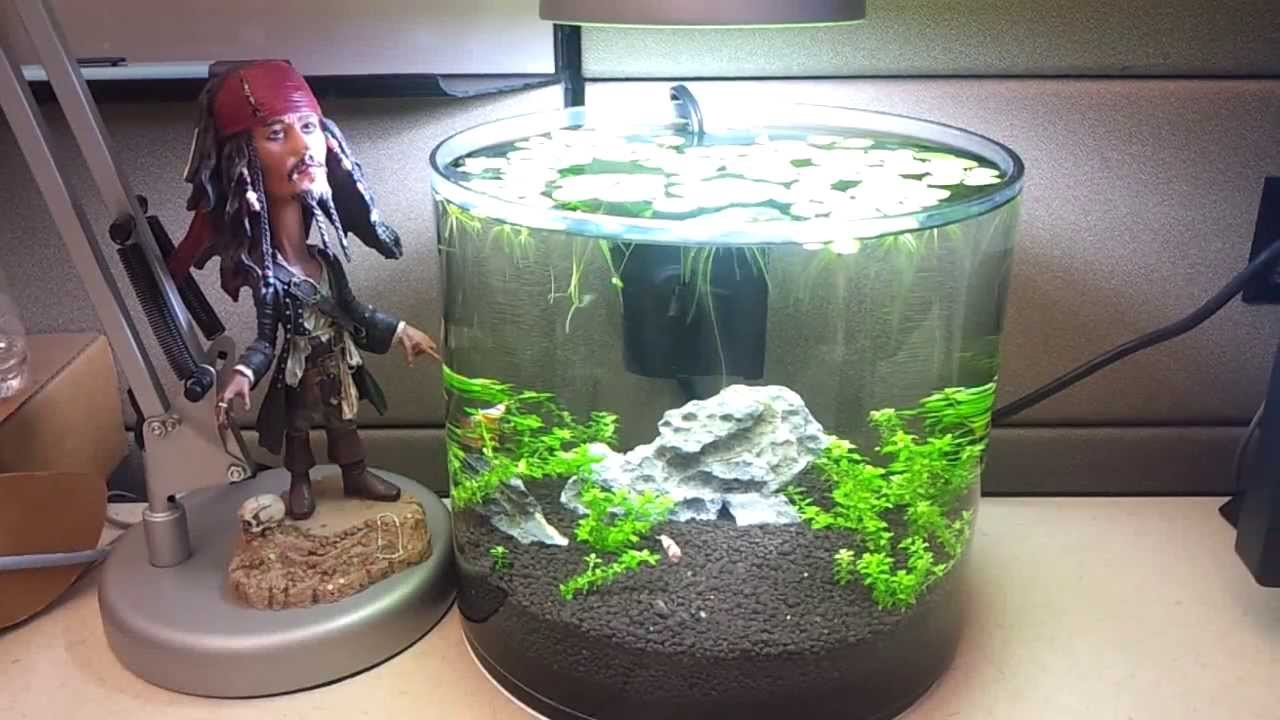 Zen tank simple 2 gallon tank for work youtube for 2 gallon fish bowl