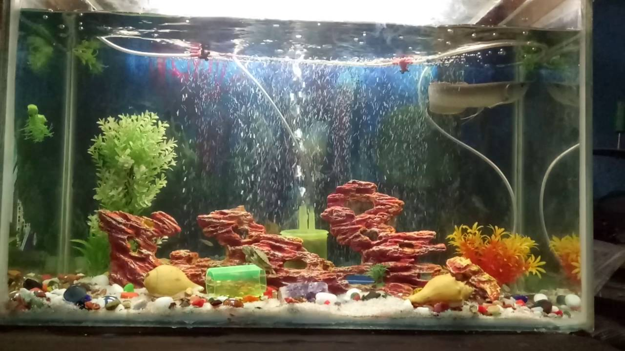 How to Set up a Saltwater Aquarium in 10 Steps