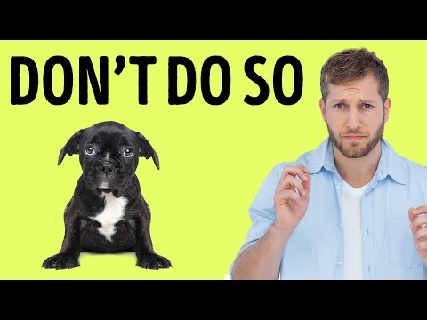 Thumbnail: 12 Things Your Dog Hates About You