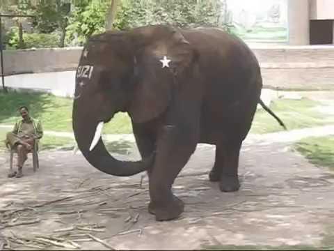 Lahore Zoo with original natural Environment 9 May 2009
