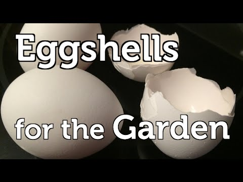 How and Why I Use Eggshells to Fertilize my Organic Garden