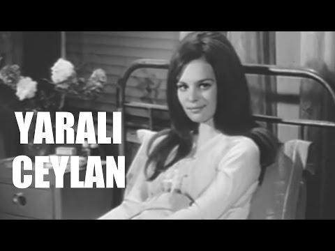 Yaralı Ceylan - Türk Filmi